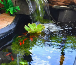 Aquarium and Pond Suppliers