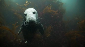 Seal Encounter Dive Trips At Lundy
